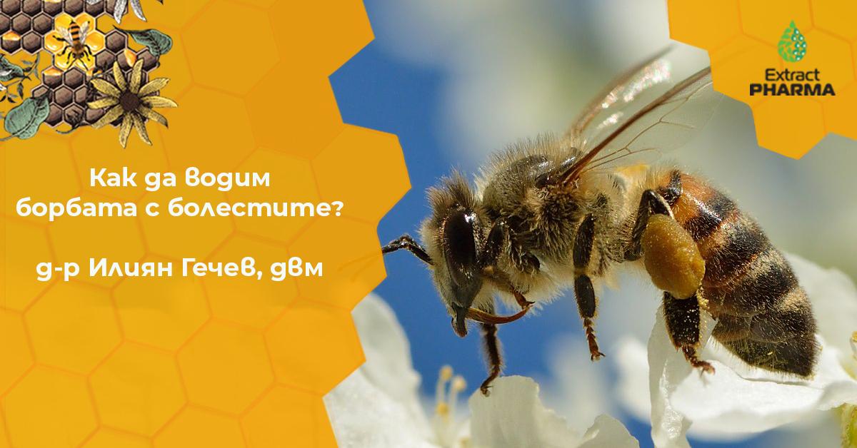 Как да се справим с болестито по пчелите