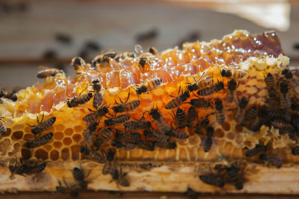 инспекция за здравословно състояние на пчелните семейства extractpharma