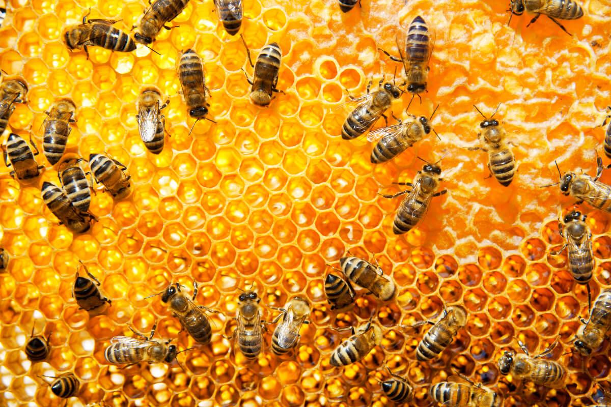 инспекция на пчелните семейства